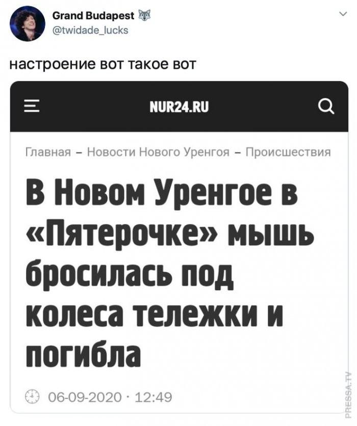 Мышь_Новый_Уренгой.jpg