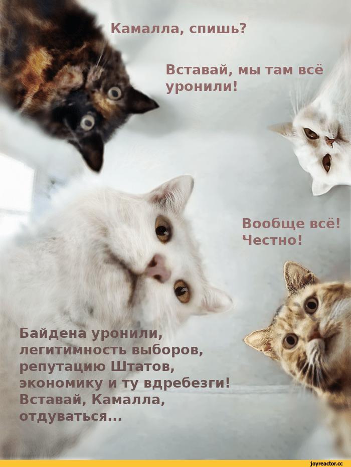 котейки-Наташа-вставай-мемы-3734965.png