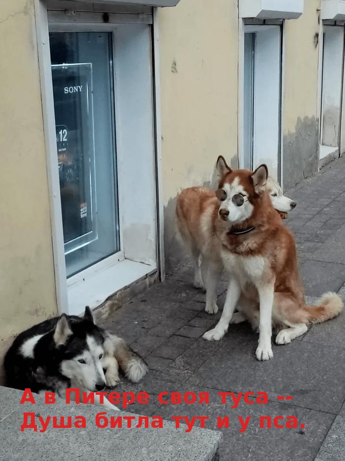 Собака_Битлы.png