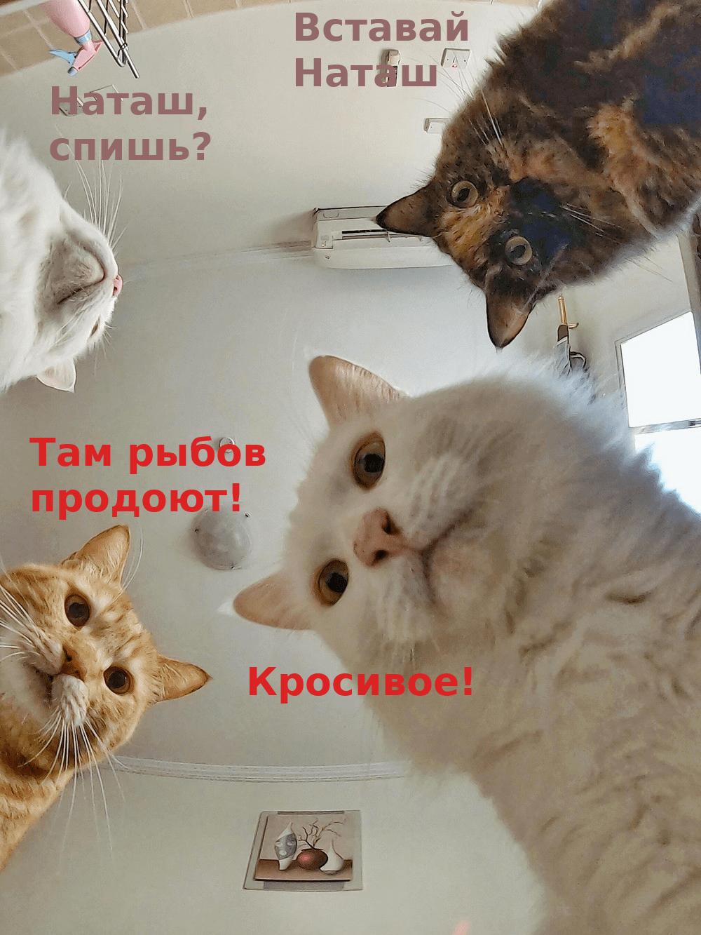 Коты_Наташа.png
