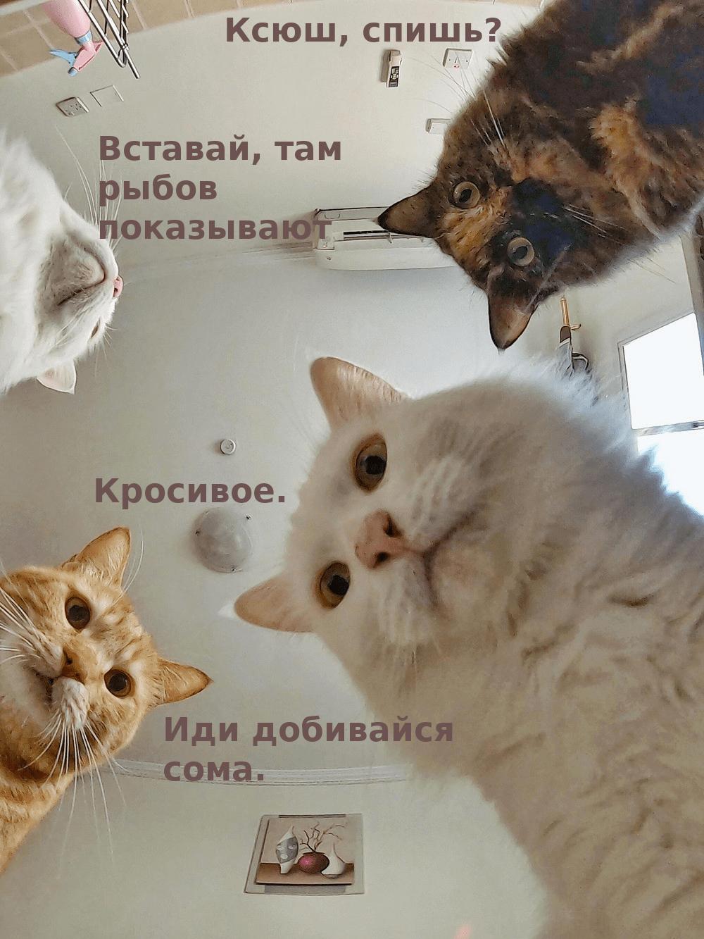 Коты_Собчак.png