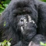 Kong King